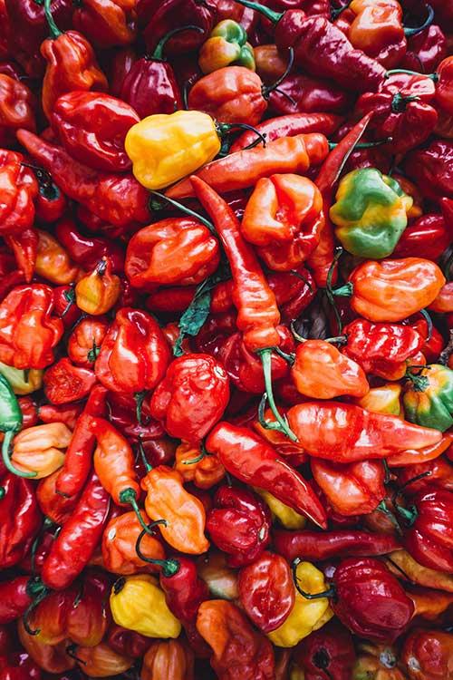Mexican chilis Jose Mier company